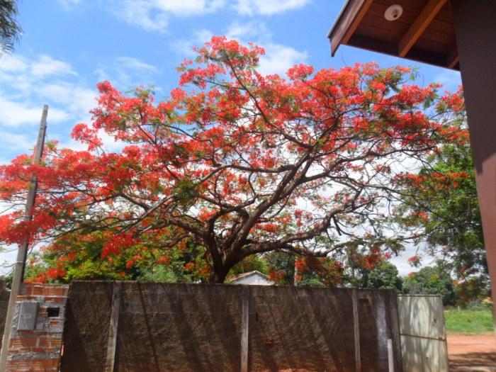 Árvore no espaço livre do terreno - Fonte: blog minhacasaminhavida-aline.blogspot.com